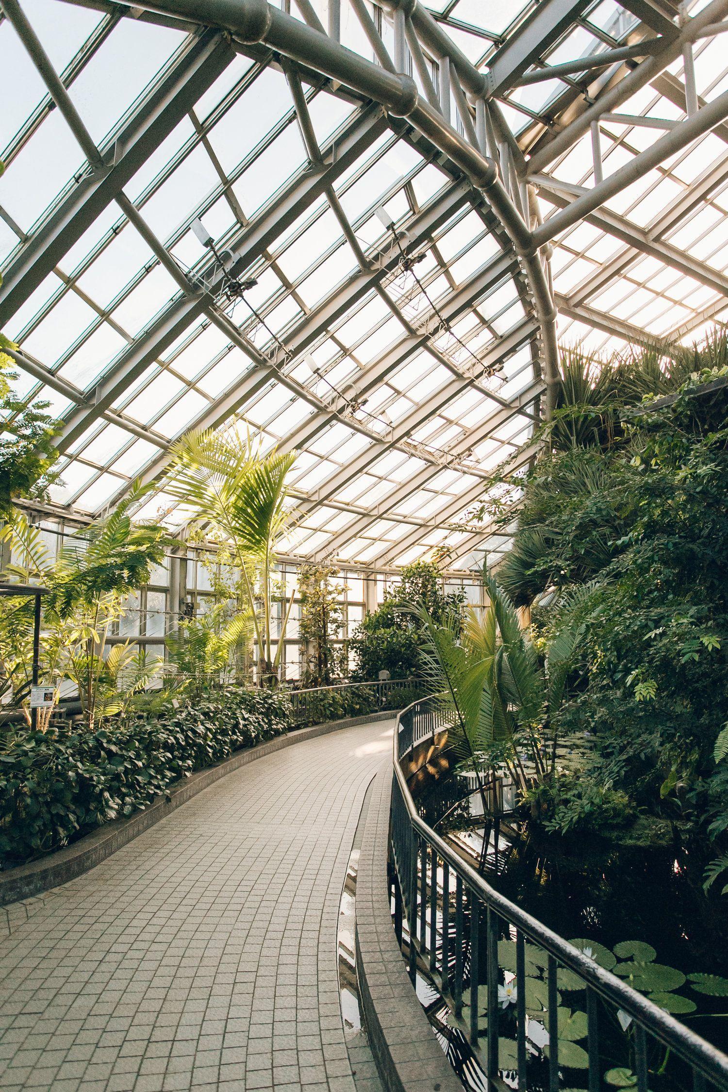 Kyoto Botanical Garden Haarkon in Japan greenhouse