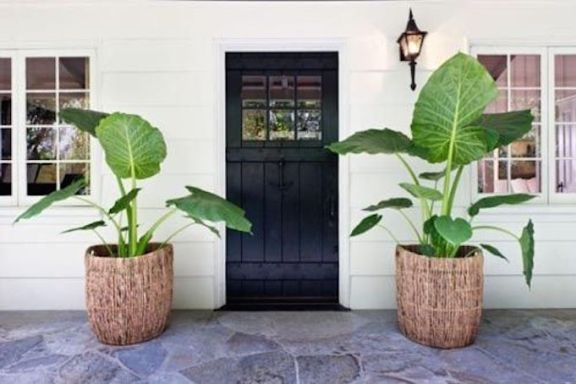 8 Pretty Ideas for Front Porch Plants is part of Front porch plants, Front porch flowers, Porch plants, Porch flowers, Front porch flower pots, Front door plants - Make a huge impact with today's affordable spring curb appeal tip  Flank your front door with seasonal greenery and flowers for an instant refresh