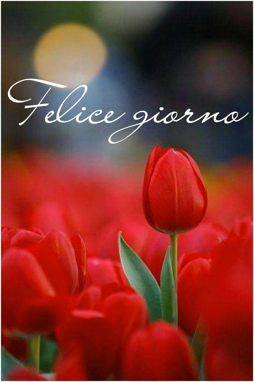 Immagini romantiche di invia o condividi via whatsapp for Immagini del buongiorno bellissime