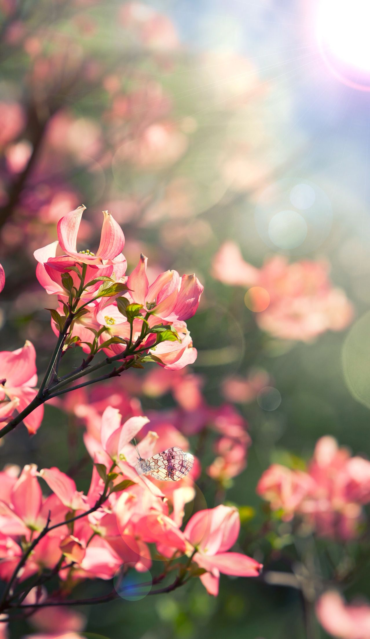 Save And Set Spring Wallpaper Beautiful Flowers Wallpapers Flower Aesthetic