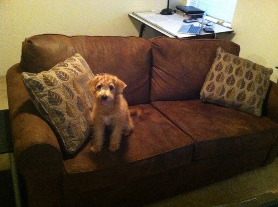 A really great sleeper sofa. Even our dog thinks so! -Michael B.