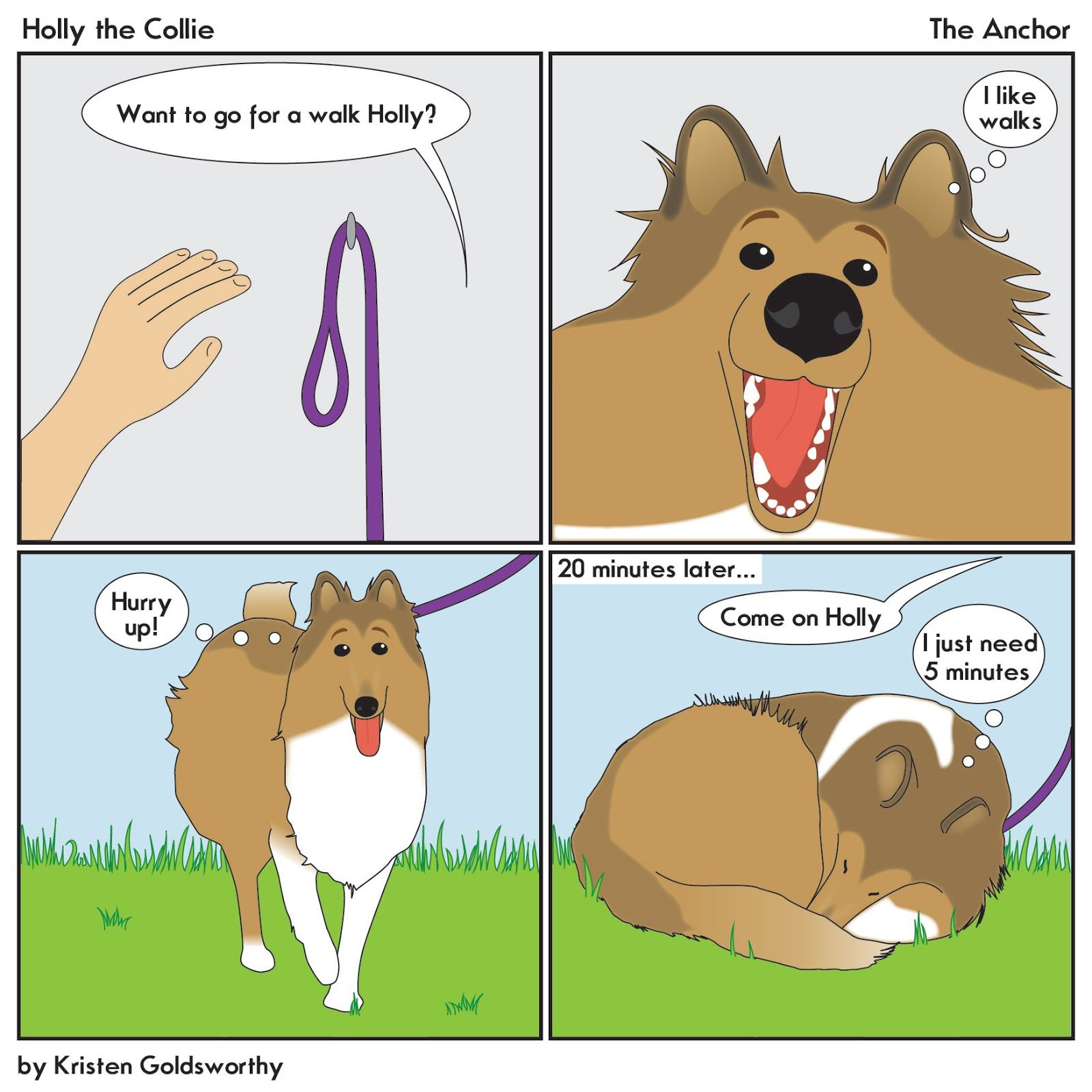 Image Result For Holly The Collie Collie German Shorthaired