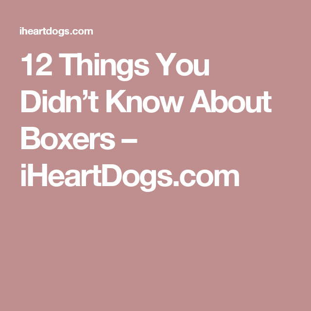 12 Things You Didn't Know About Boxers – iHeartDogs.com