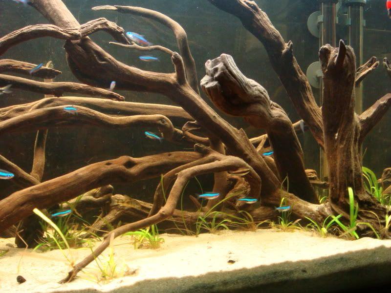 South American Biotope Cichlid Aquarium Fish Tank Biotope Aquarium