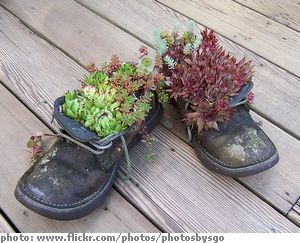 Marvelous #succulent #shoe #container #garden