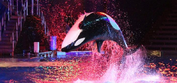 50ª celebração do SeaWorld é um mar de SURPRESAS