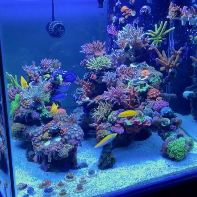 Reefcubed reef tanks pinterest aquariums reef for Aquarium recifal nano