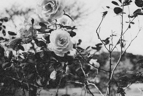 Black And White Flowers Background Tumblrblack And White Flower ...