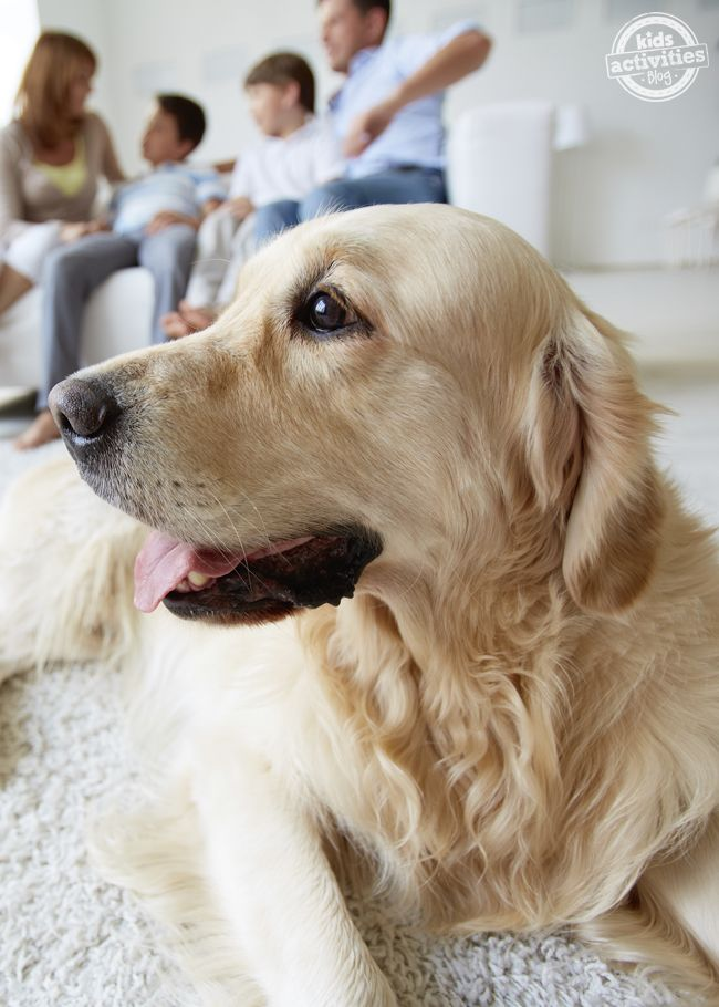 11 Best Pets For College Students Tips Before You Buy Best Pets For Kids Dogs Pets