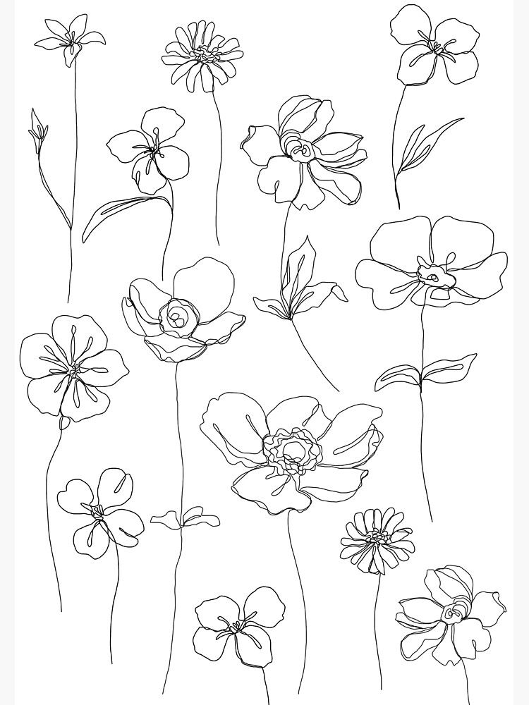 Botanical floral illustration - Botanicals White P