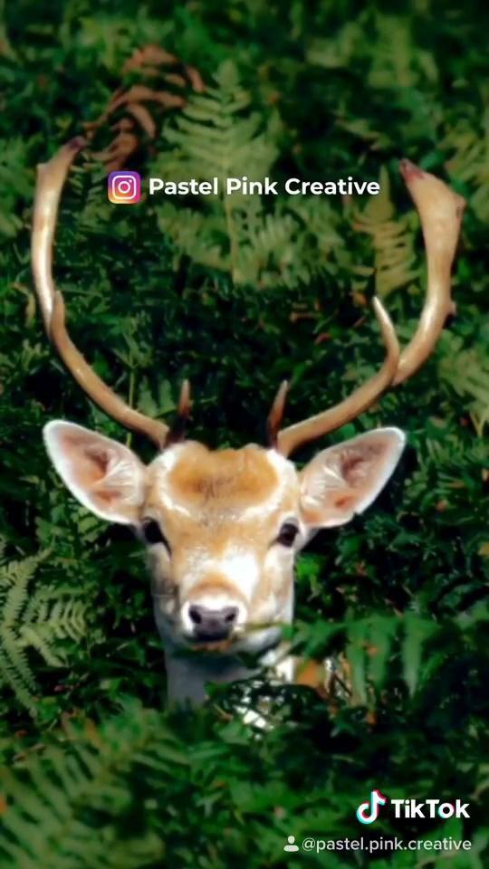 #adobe #adobelightroom  #lightroom #photocorrection #correction #colorcorrection #green #deer #forest #nature #mobileapp #pastelpinkcreative #socialmedia #creativeagency #tiktok
