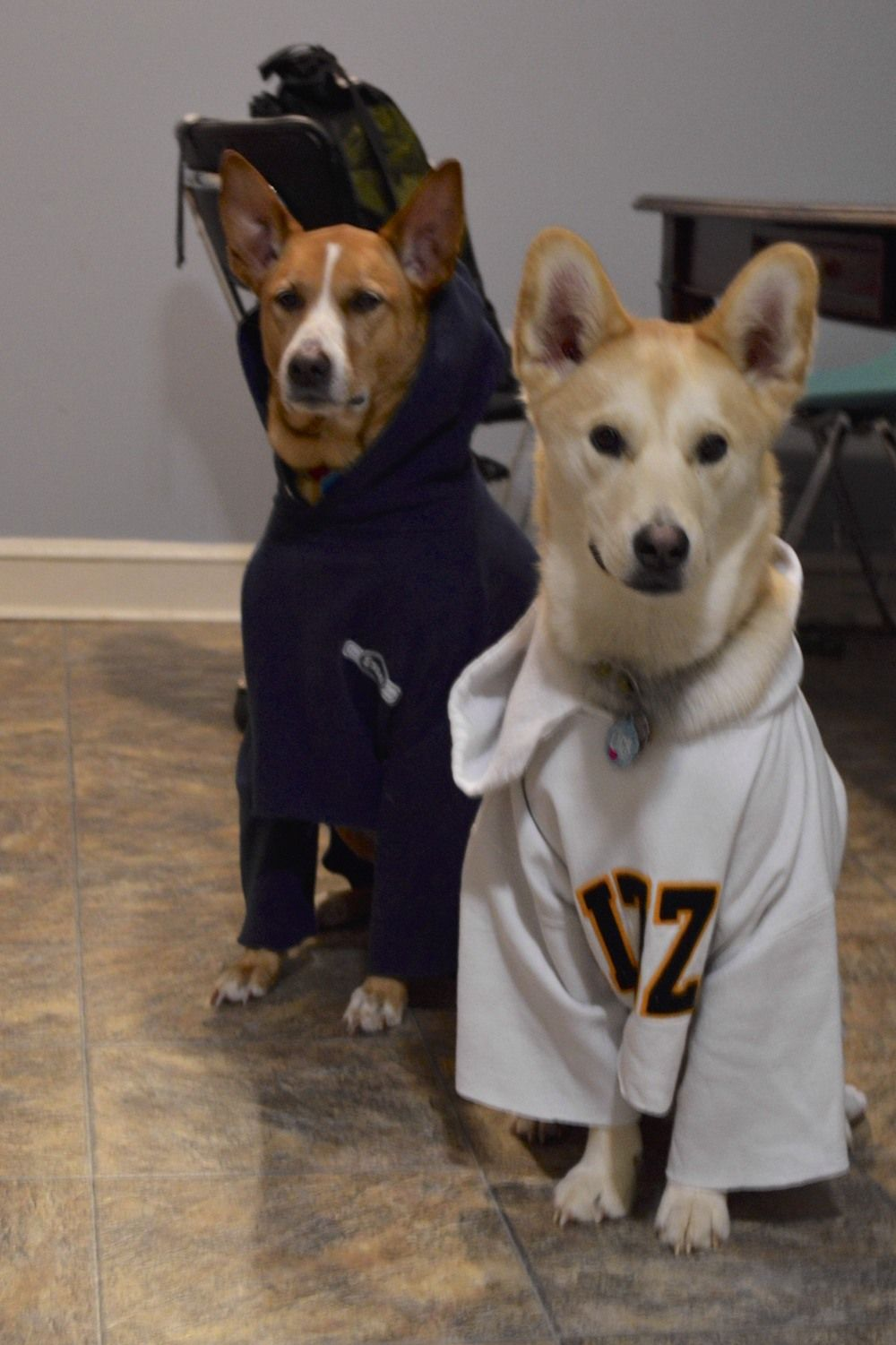 My Dog Is Warmer Than Your Dog How To Make A Pup Hoodie Dogs