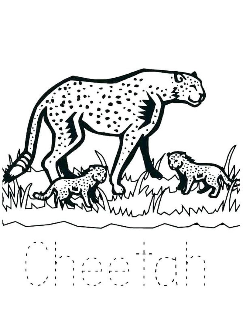 Cheetah In 2020 Animal Coloring Pages Baby Zoo Animals