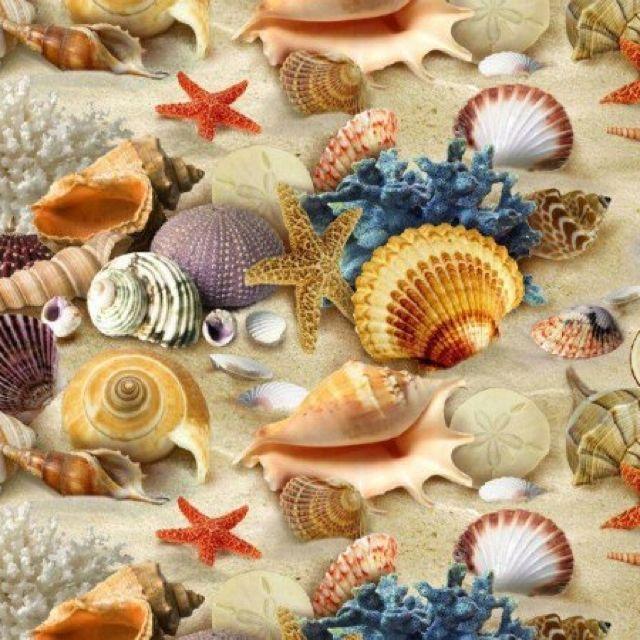 Shee shells