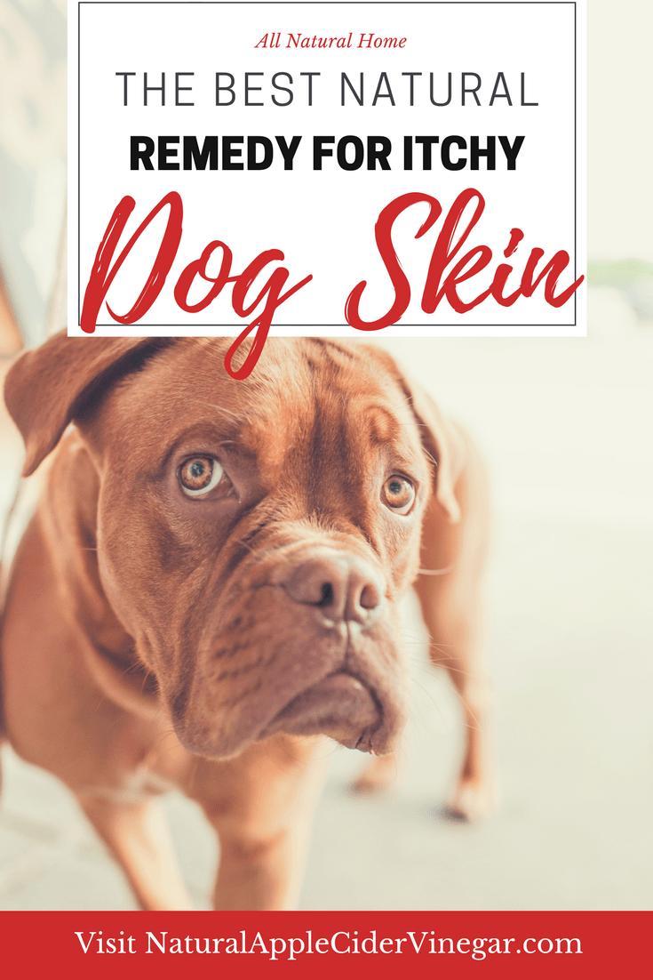 Using Apple Cider Vinegar for Dogs Skin #skintreatments