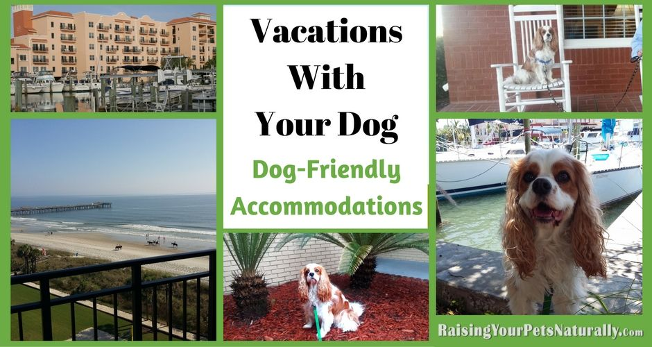 Dog Friendly Vacations And Traveling With Dogs Find The Best Pet And Dog Friendly Hotels Resorts And Cabins Dog Friendly Vacation Dog Friendly Hotels Dog Travel