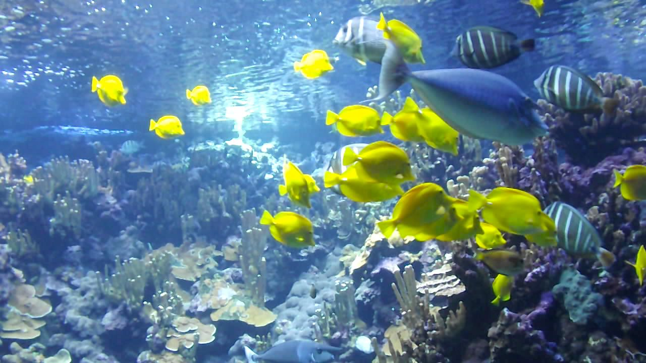 maui coral reefs - diving at molokini crater