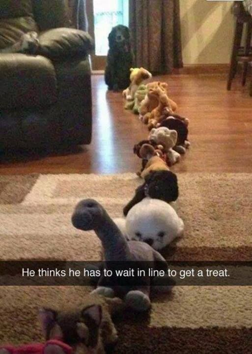 Dog Patiently Waits In Long Line Of Stuffed Animals For A Treat