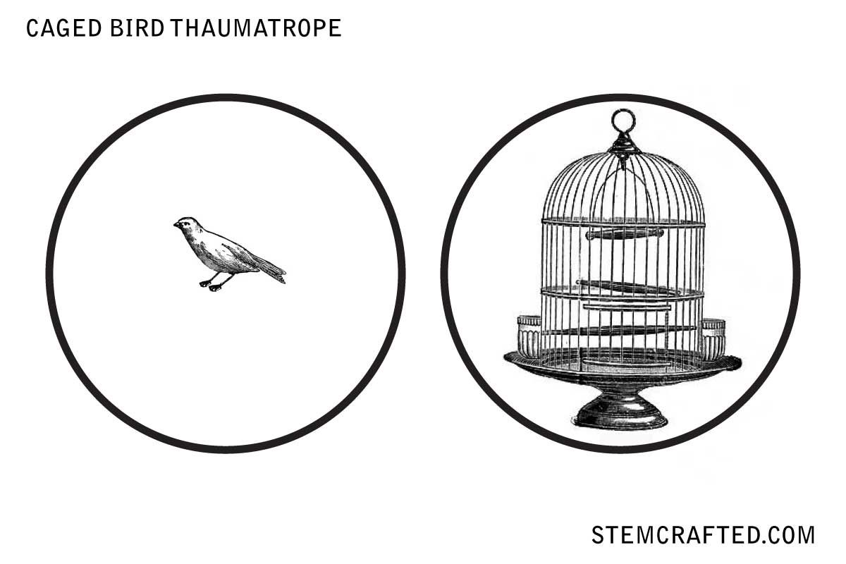 image relating to Thaumatrope Printable identified as Caged Chook\