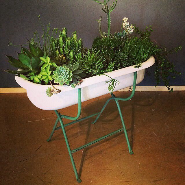 Succulent garden inside baby bathtub | For the Home | Pinterest ...