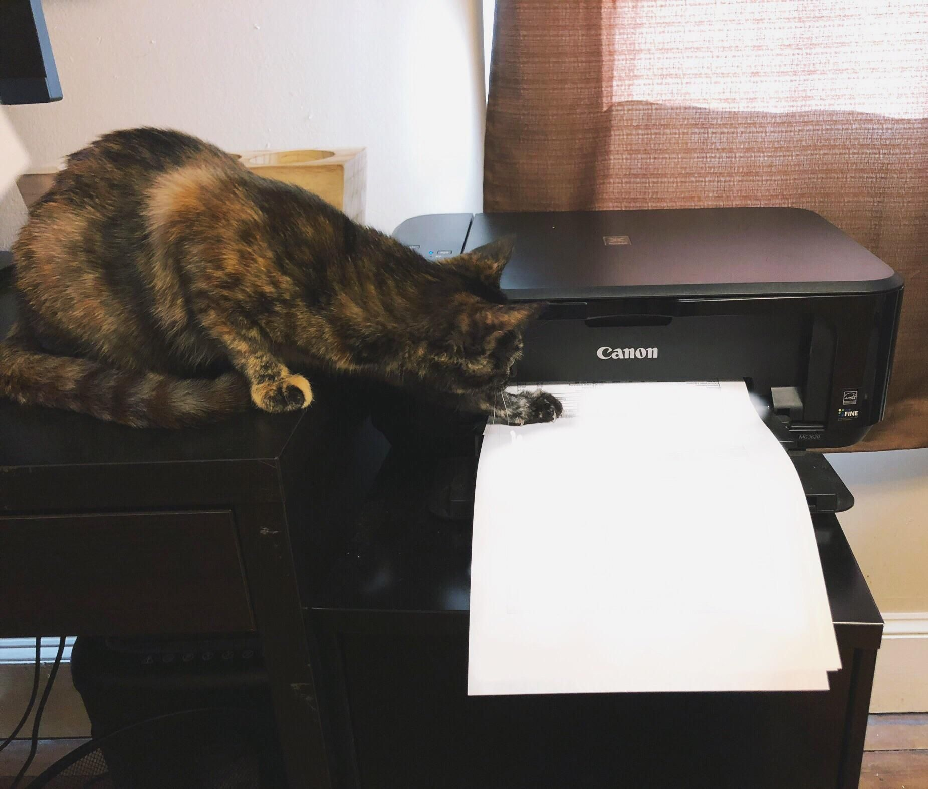 Everyone Please Give A Warm Welcome To The Newest Member Of Our Team Lilian Brings A Wealth Of Clerical Experience To Our Office An Cats Funny Cats Cat Lovers