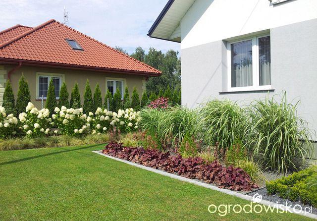 Wizytowka Moja Codziennosc Hydrangea Paniculata Plants Garden