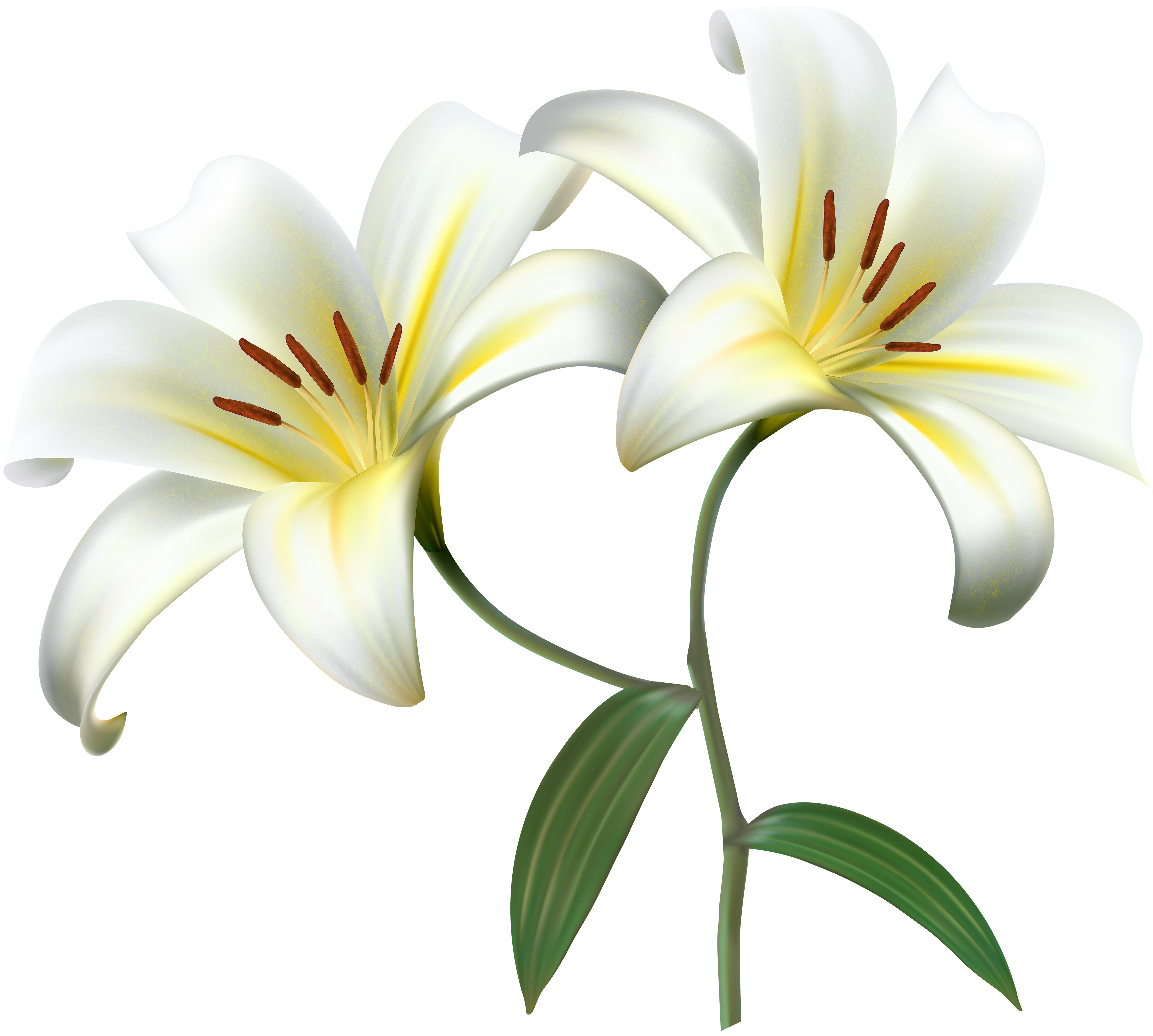 White Lilium Flower Decorative Transparent Image Gallery Yopriceville High Quality Images And Transparent Png Free Clipa Lilium Flower White Lilium Lilium