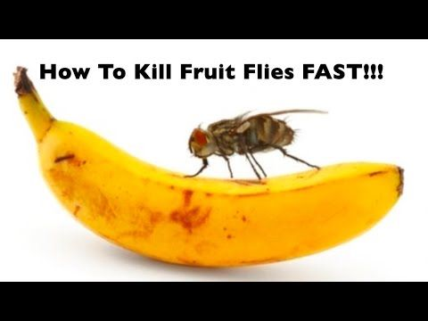 DIY | HOW TO: Get Rid Of Fruit Flies GNATS FAST!! Quickest & Easiest Way To Kill Flies! Gnats Gone! #gnats
