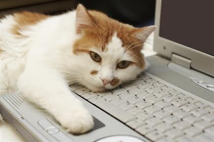 Your Cat is Seeking Affection From Your Laptop...