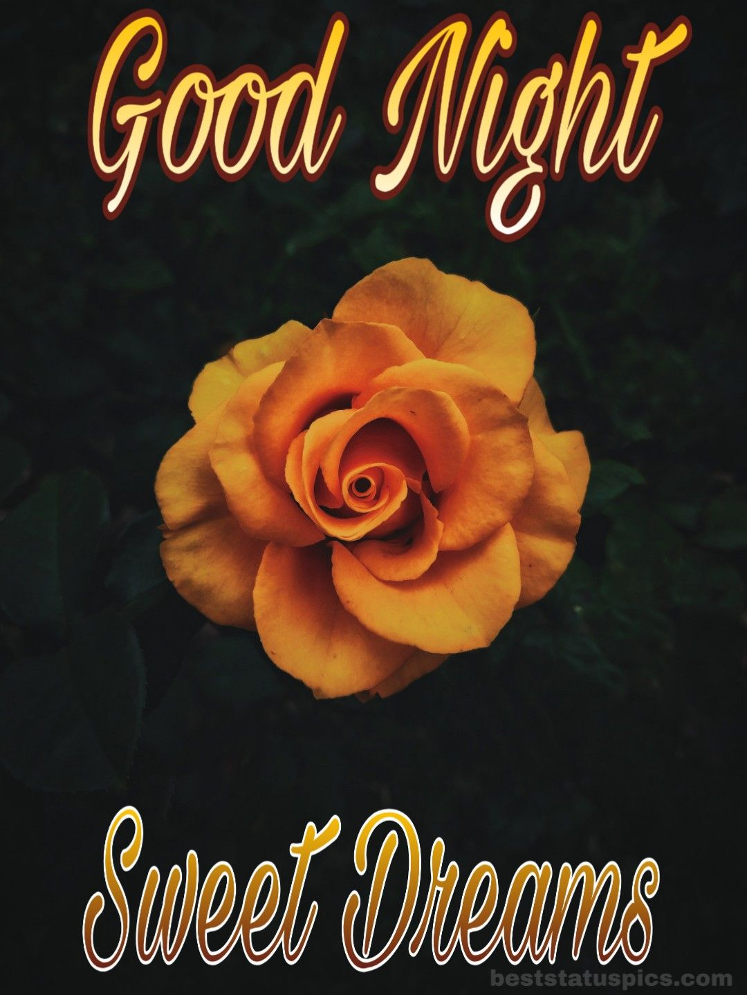 Good Night Yellow Rose Flower Images In 2020 Yellow Rose Flower Good Night Flowers Flower Images