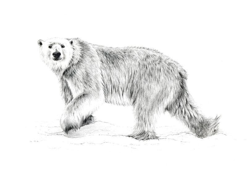 Polar bear tattoo   Tattoo   Pinterest   Tattoo ideen und Ideen