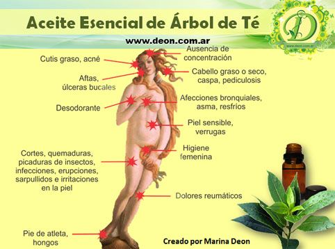 Todas Las Propiedades Del Aceite Esencial De árbol De Té Remedios Para El Acne Aceite Arbol De Te Acné