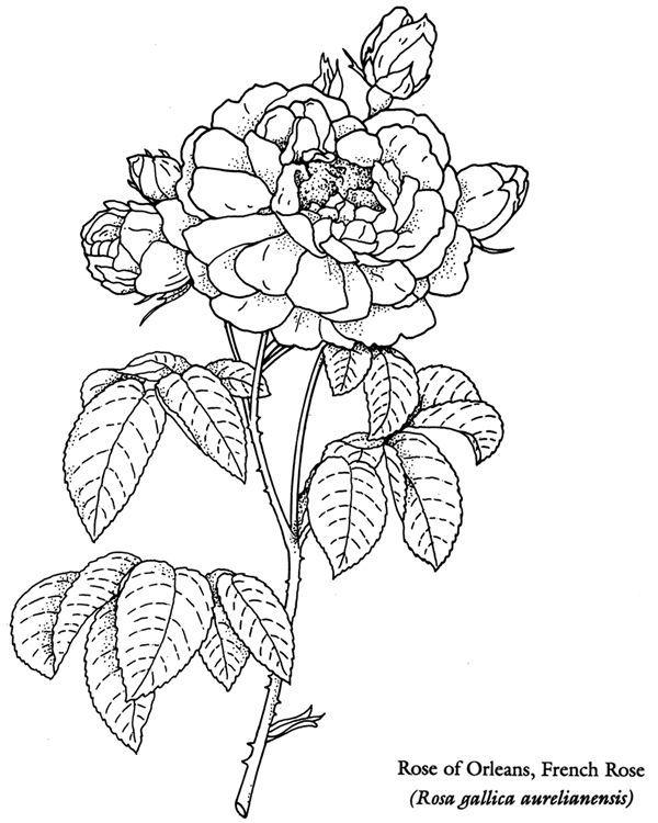 Willkommen Bei Dover Publications 9505