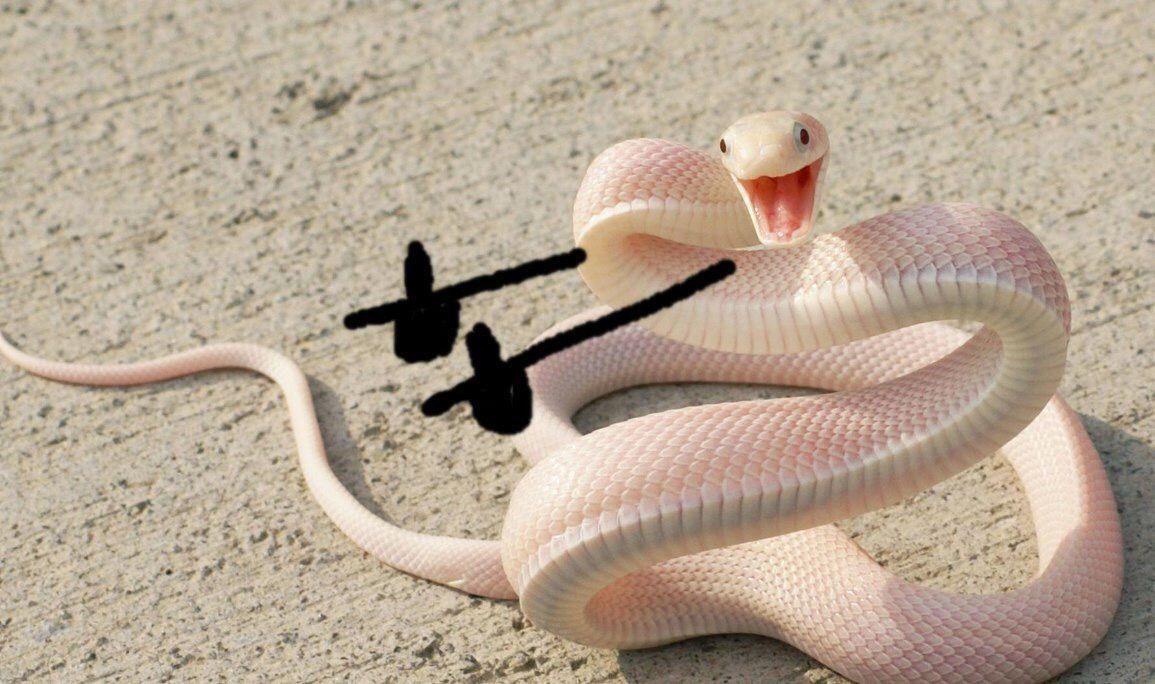 Фото привет от хитрый змей