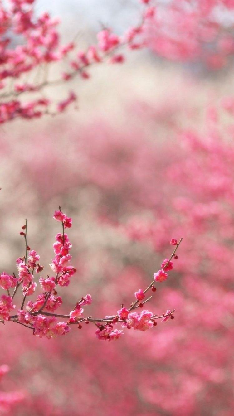 Background image iphone 6 - Springtime Background Iphone 6 Wallpaper 36865 Nature Iphone 6 Wallpapers