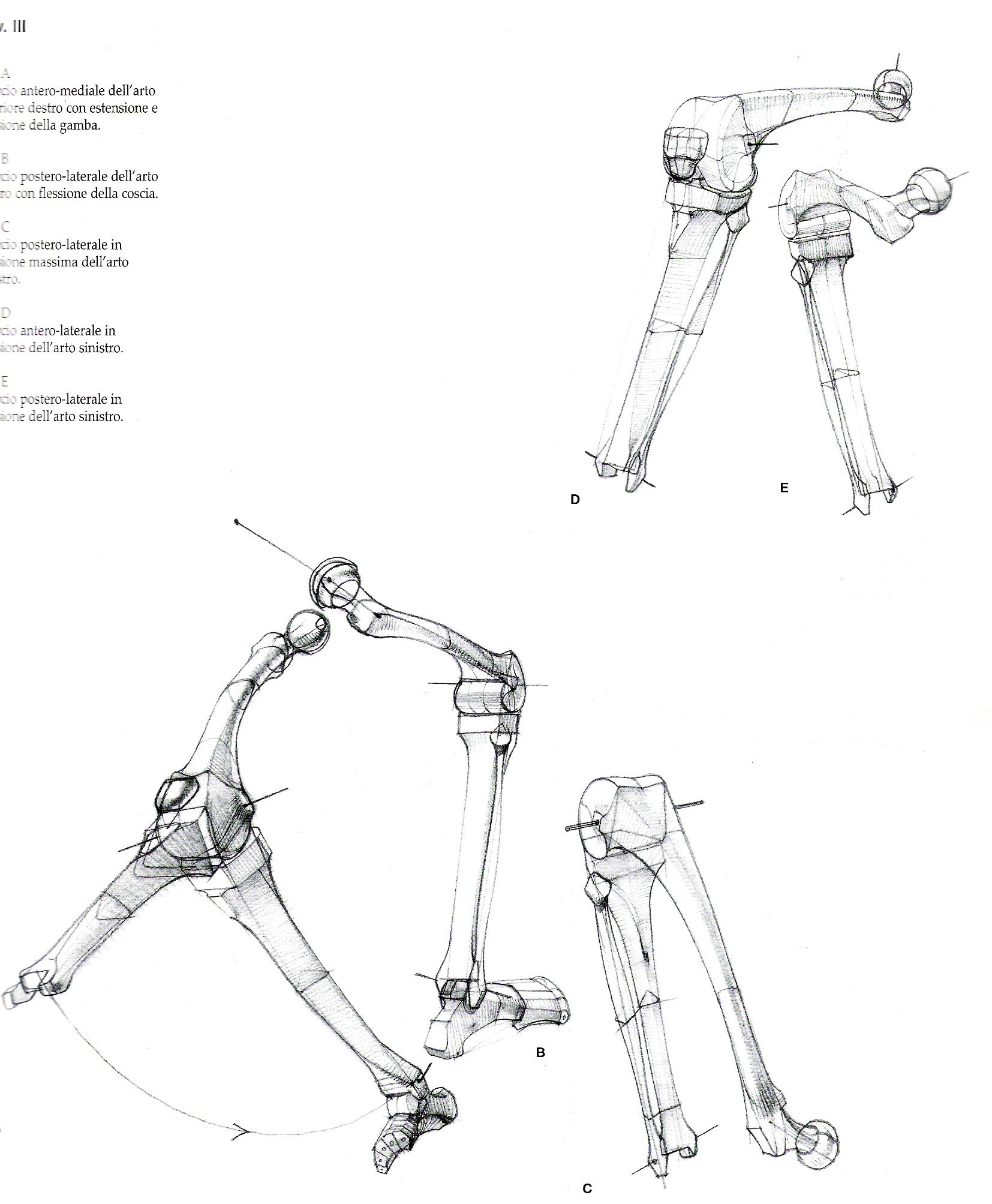 Bones * | Anatomia humana para artistas | Pinterest | Anatomía ...