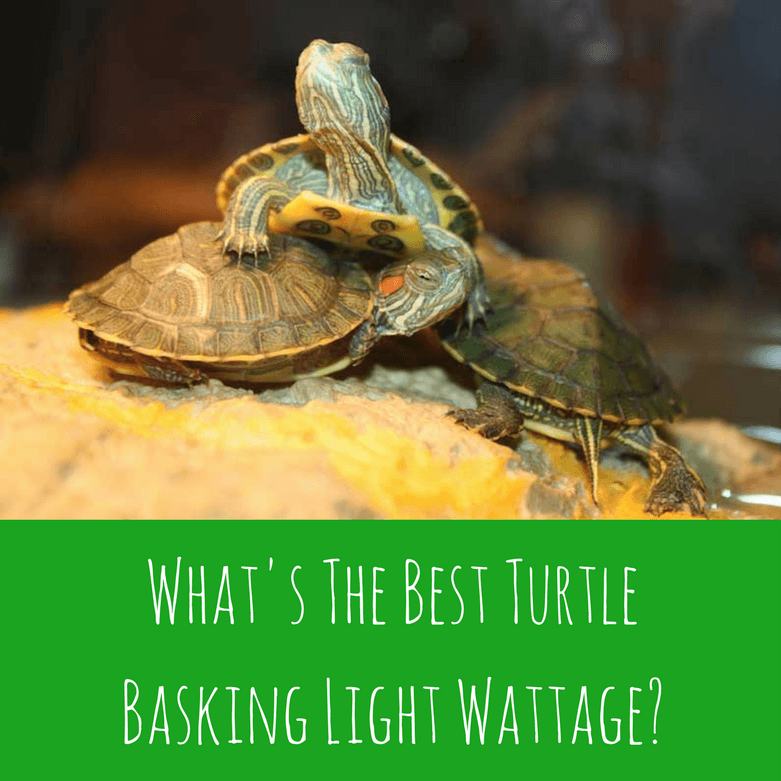 Clear, Simplified, HowTo Guides for Pet Turtle Owners