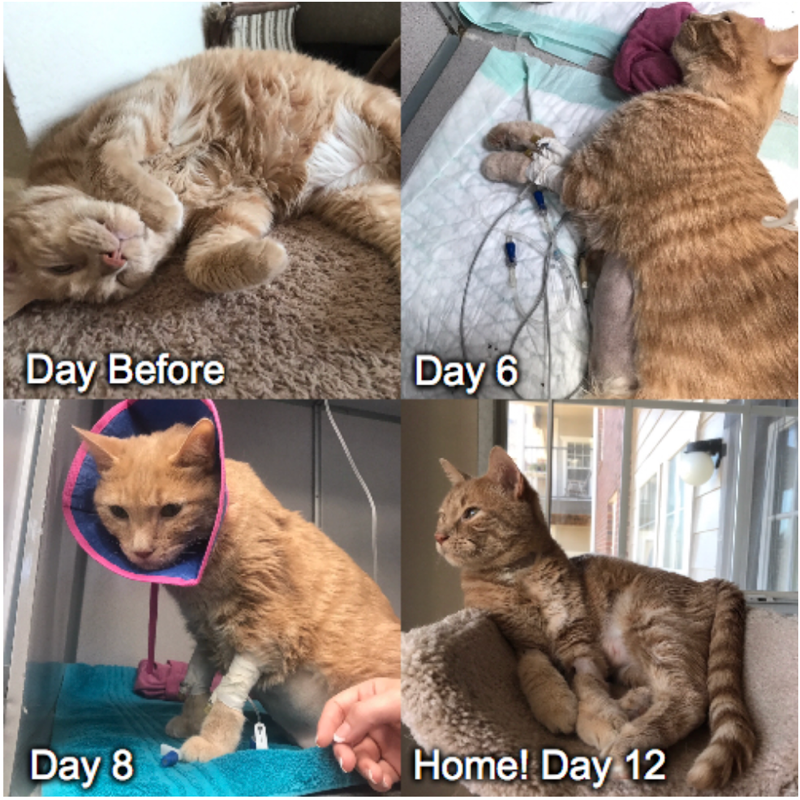 I almost lost my best friend of nearly 9 years last week. A possible infection caused his diabetes to become uncontrolled. Hippo is finally home! by Zaimilton cats kitten catsonweb cute adorable funny sleepy animals nature kitty cutie ca