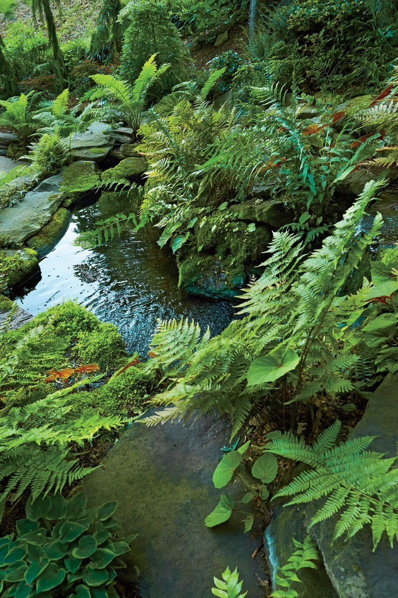 Koi Pond and Fern Garden . Southern Livings List of Ferns