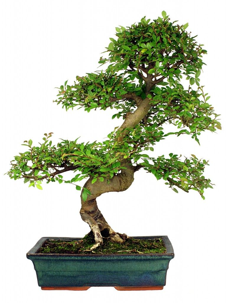 how to take care of my bonsai tree