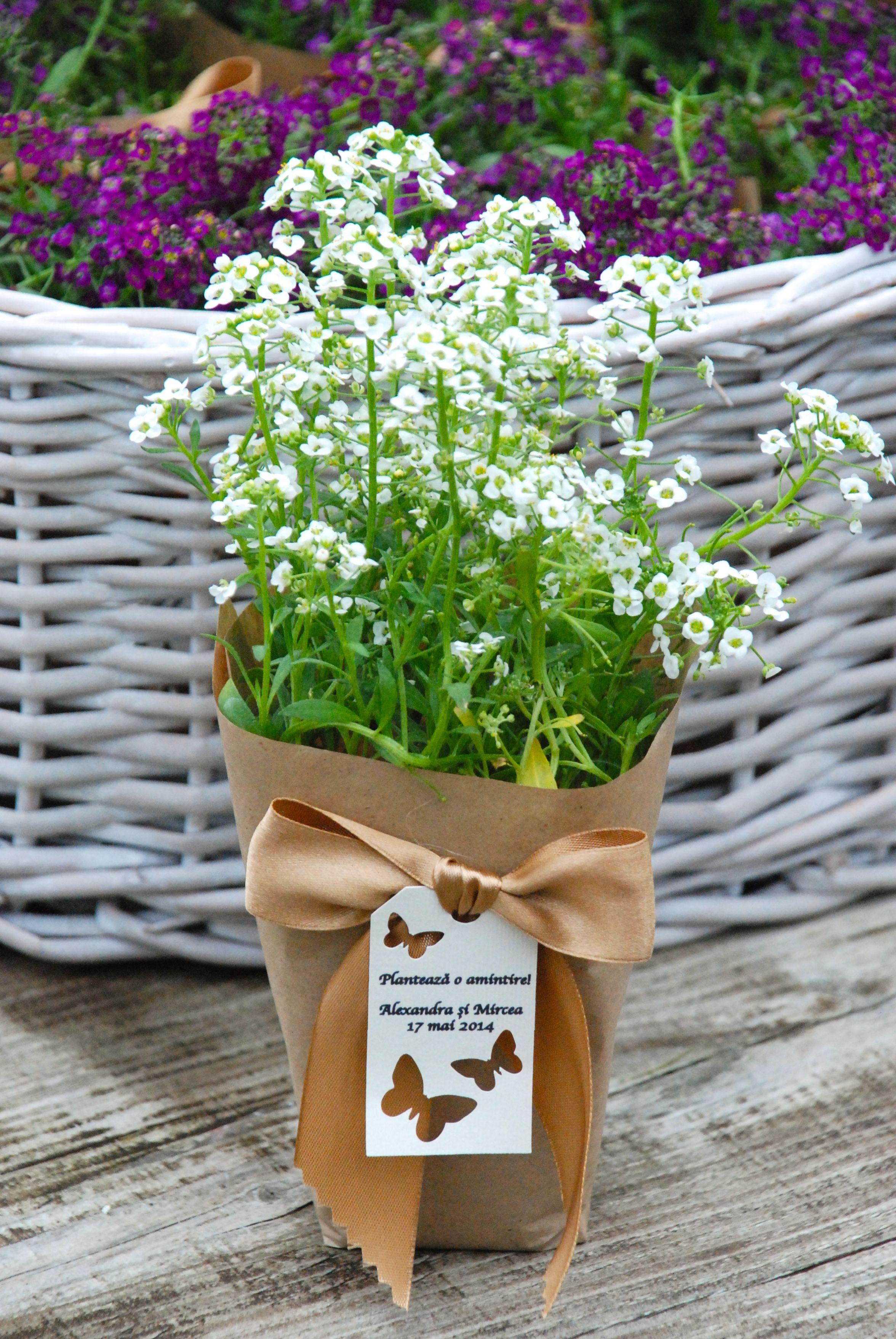 Flower pot gift favor | Growing gift favors | Pinterest | Favours ...