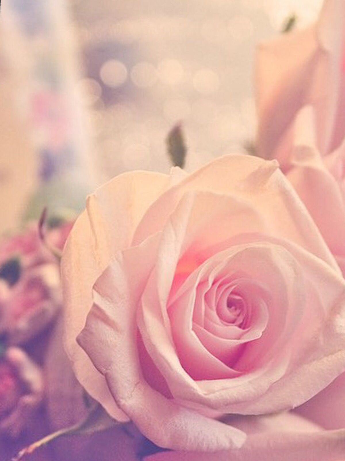 Cute Rose Wallpaper Wallpaper Marieghansen Cute Rose Rose Rose Gold Backgrounds