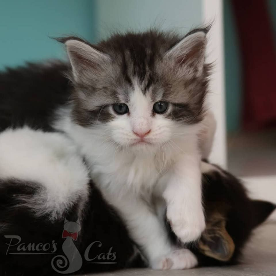 3 T Girl 1 Month Old 3 Cute Animals Kittens Cats And Kittens