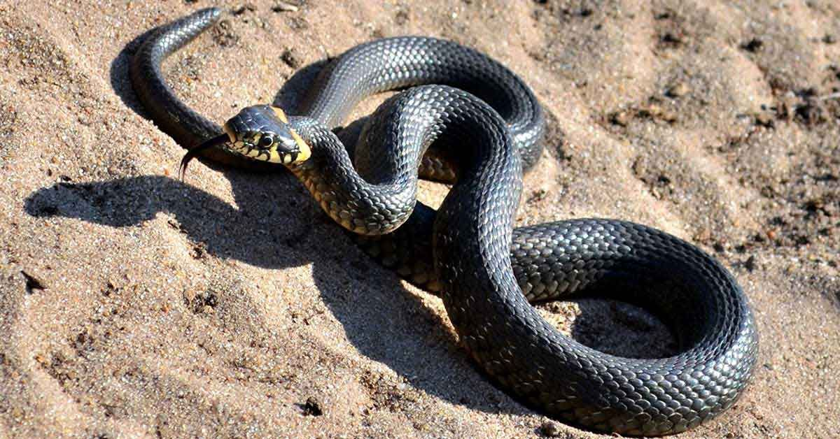Ruyada 3 Yilan Gormek In 2021 Snake Animals