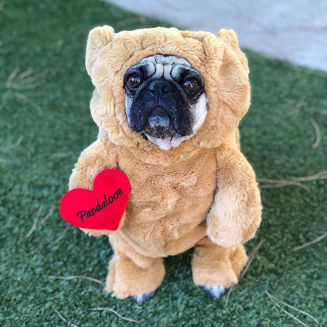 Shaq Halloween 2020 Pandaloon teddy bear costume looks so perfect on you Shaq its like