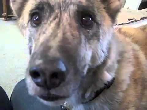Talking Dog Teased Contributors I Funny Animals Talking Dog