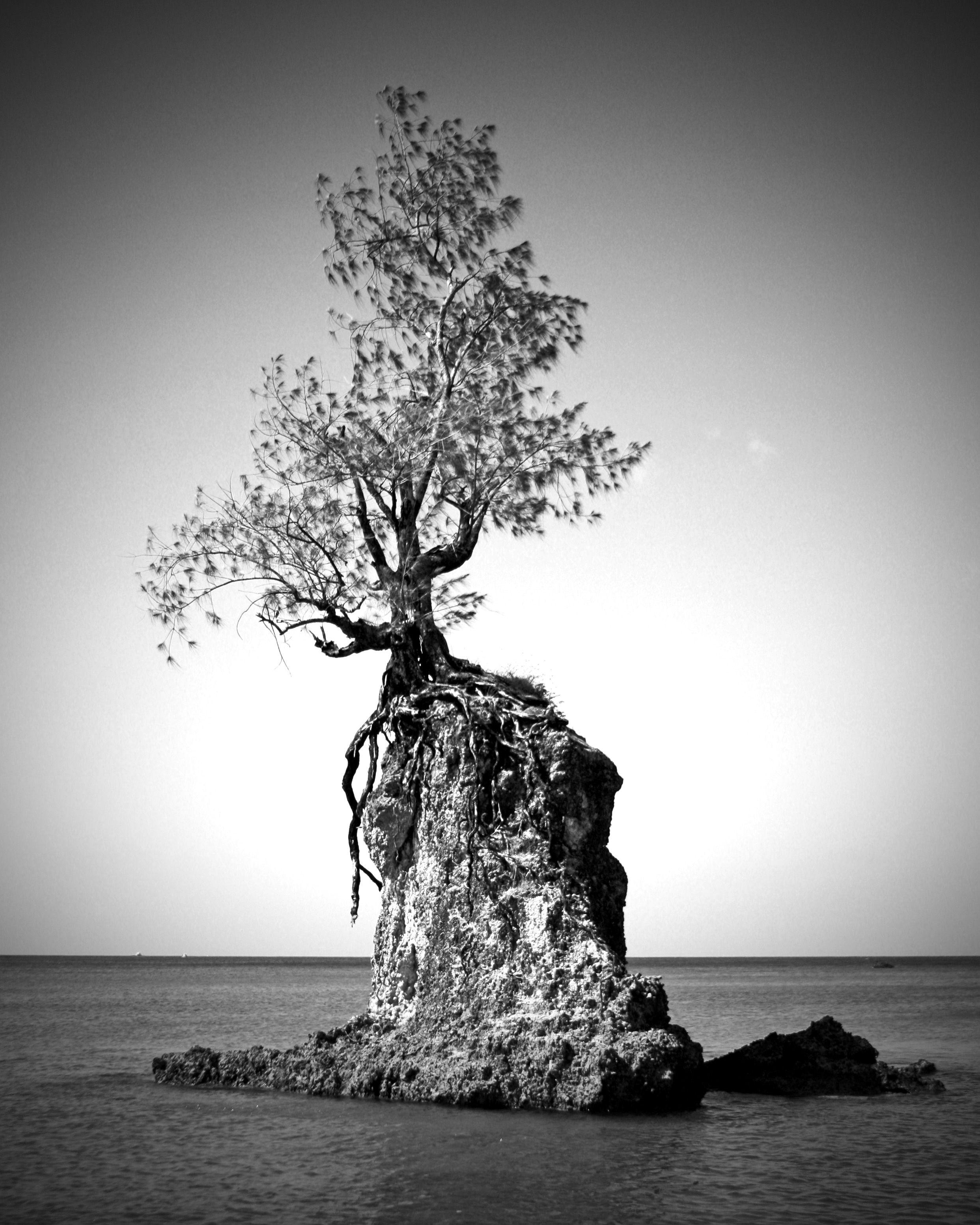 "Solomon Islands Beach: ""Endurance"" Tree On Rock In Agat Bay, Agat, Guam"