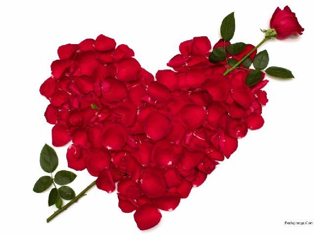 Nice Flowers 2 Jpg 640 480