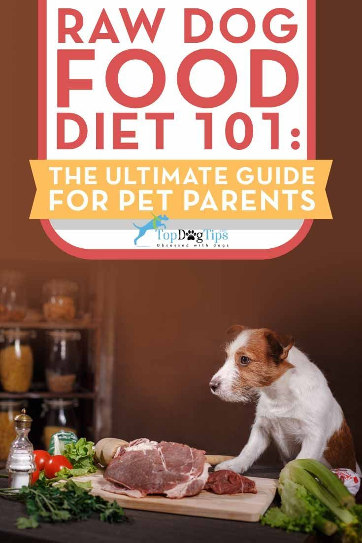 Raw Diet For Dogs 101 The Ultimate Guide Dog Food Recipes Dog