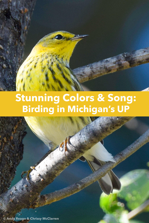 6 Perfect Spots For Bird Watching Pet Birds Pretty Birds Bird Photo